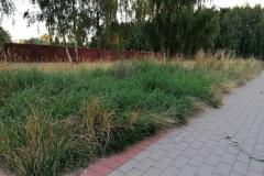 Trawa w Koziegłowach - Lipiec 2020